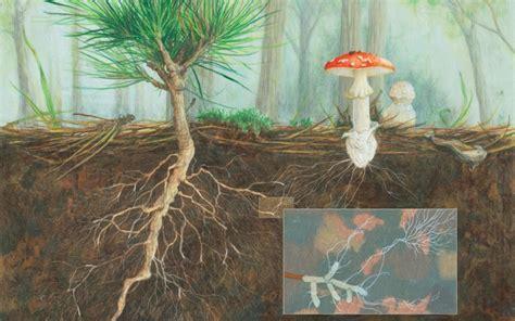 consciousness  plants wake  world