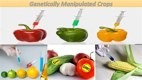 Modification Genetic Organisms by Genetically Modified Crops Images