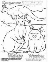 Coloring Animals Zoo Really Wallaby Kangaroo Song Coloringbook sketch template