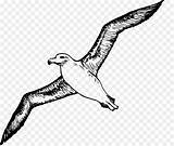 Clipart Albatross Outline Bird Drawing Coloring Screening Clipground sketch template