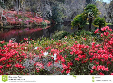 Garden Path Photography by Middleton Plantation Sc Azalea Garden In Bloom Editorial
