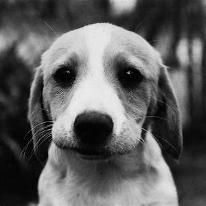 41 best sad puppies images on Pinterest | Cutest animals ...