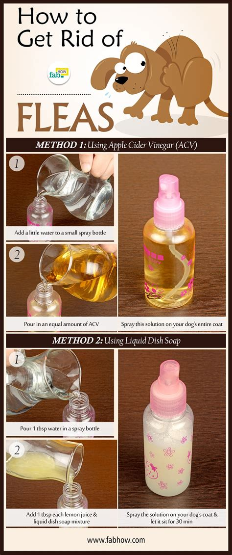 How To Get Rid Of Fleas On Dogs Fast  Fab How. Best Way To Clean Car Carpet. Bible Colleges In Alaska Not Digitally Signed. Consolidation Loans Calculator. Northeast Atlanta Health And Rehabilitation Center. Hostgator Dedicated Servers Training In Cpr. Replacement Wooden Windows Sql Server Product. Fashionable Business Cards Tip Top Shoes Nyc. Supplementary Liability Insurance
