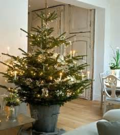 potted christmas trees make every room festive the stir