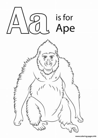 Ape Coloring Letter Printable Animal Template Sketch