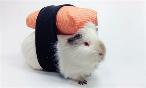 cutest halloween dressed  pets page  animalwhoop