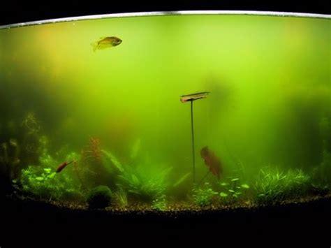 types  algae commonly   planted aquariums