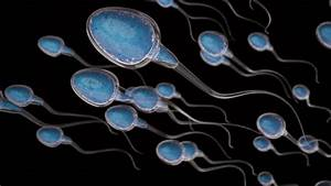 Sweeping Study Shows Sharply Declining Male Fertility
