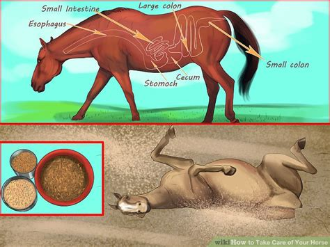horse care take step wikihow ways