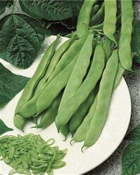 comment cuisiner des mange tout graines semis haricot nain artemis mgt plat bte 200 g
