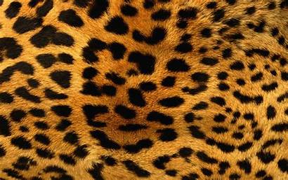 Leopard Cheetah Background Animal Skin Pattern Patterns