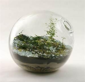 Acheter Terrarium Plante : terrarium selber machen die angewandte kunst ~ Teatrodelosmanantiales.com Idées de Décoration