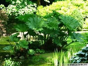 Distributeur D Eau Pour Plante : des plantes pour un sol gorg d 39 eau ~ Dode.kayakingforconservation.com Idées de Décoration