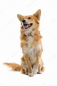 Mixed breed dog — Stock Photo © eriklam #2585561