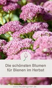 Wie überwintern Bienen : bienenpflanzen im herbst bienenpflanzen bienen und bienenfreundlicher garten ~ A.2002-acura-tl-radio.info Haus und Dekorationen