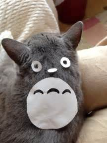 totoro cat cat owners in japan are turning their pets into totoro