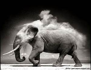 Elephant Wallpaper Desktop Black And White   Amazing ...