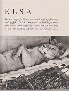 Borne Free Lyon : 17 best images about born free on pinterest novels lion and elsa and ~ Medecine-chirurgie-esthetiques.com Avis de Voitures