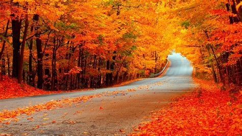 Autumn Roads Wallpapers by Autumn Road With Orange Trees Hd Wallpaper Background