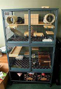 25+ best ideas about The Cage on Pinterest | Hedgehog cage ...