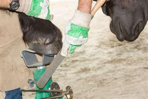 arthrose beim pferd  koennen sie tun equidocsequidocs