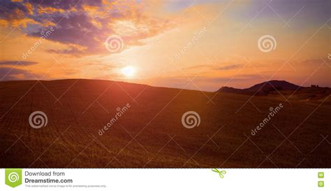 Landscape On A Green Field At Sunset Of The Day Royalty