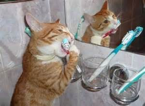 cat teeth cleaning 404 page not found error feel like you re in the