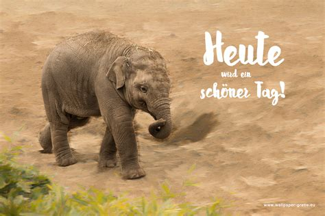 elefant  hintergrundbild kostenlos