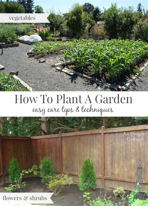 How To Plant A Vegetable Garden In Your Backyard by How To Plant A Garden The Easy Care Way