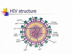 List Of Synonyms And Antonyms Of The Word  Hiv Diagram