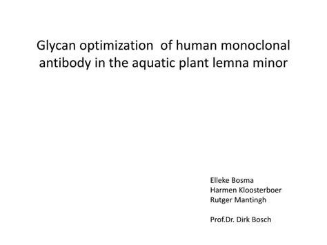 monoclonal lemna minor glycan optimization aquatic antibody plant human ppt powerpoint presentation skip