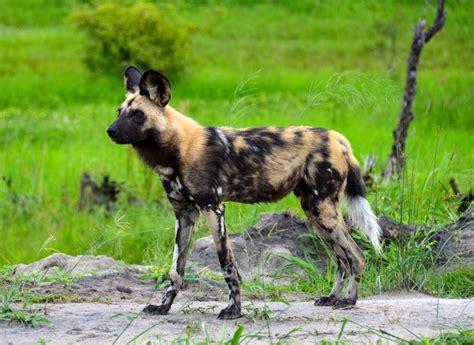 hunting dog names ideas  pinterest