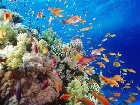 ทะเล(sea): ระบบนิเวศทางทะเล