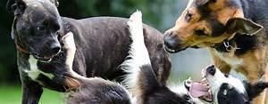 Bodenbelag Für Hunde Geeignet : zehn geeignete hunderassen f r anf nger ~ Lizthompson.info Haus und Dekorationen