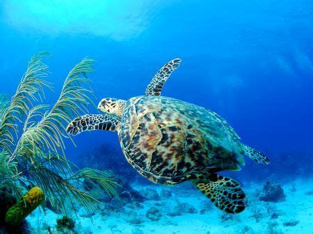 The Cayman Islands Are One Of The World's Best Diving
