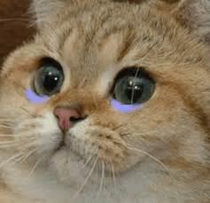 cat cry cat on