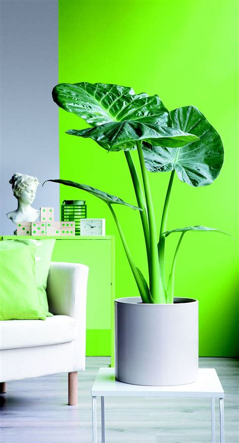 plante verte chambre les 25 meilleures idées de la catégorie plante d 39 intérieur