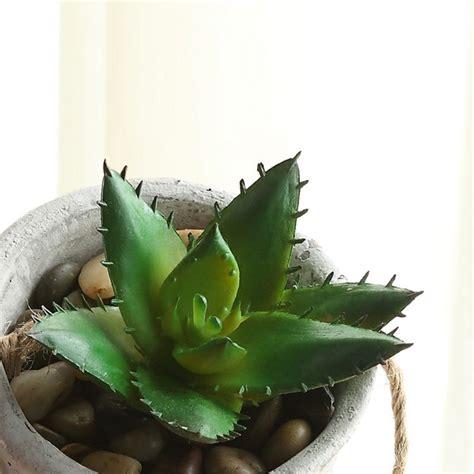 plante verte interieur depolluante plantes vertes d int 233 rieur 40 propositions pour changer votre ambiance archzine fr