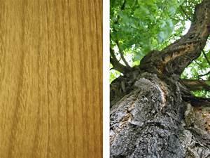 Möbel Aus Tropenholz : nat rlich holz m bel aus gewachsener natur walli wohnraum garten ~ Markanthonyermac.com Haus und Dekorationen