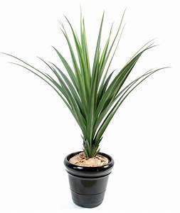 Plantes à Suspendre : plante verte exterieur ~ Premium-room.com Idées de Décoration