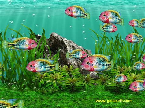 3d Animated Fish Wallpaper - animated fish aquarium desktop wallpapers wallpapersafari