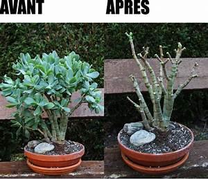 Comment Tailler Un Ficus : effeuillage bonsai ficus ~ Melissatoandfro.com Idées de Décoration