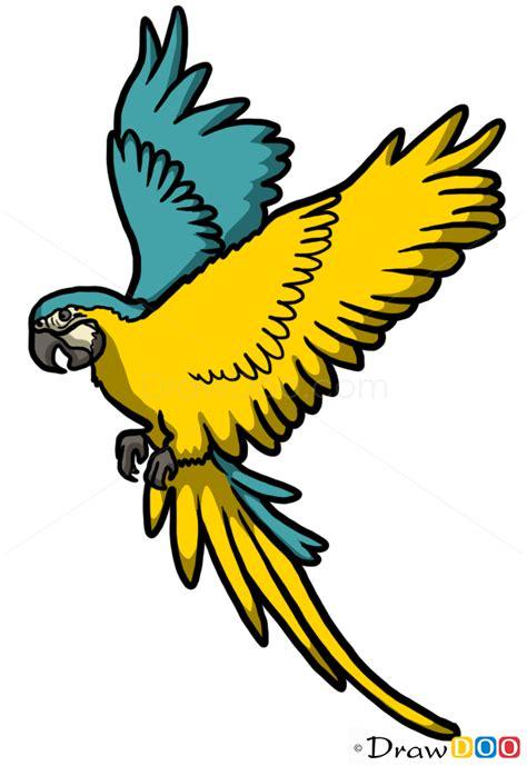 draw  parrotwild animals step  step drawing