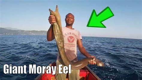 eel giant fish moray grouper caught