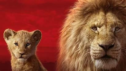 Lion Simba King Mufasa Wallpapers 5k
