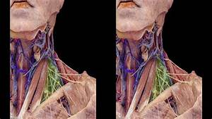 Head And Neck Anatomy For Neurosurgeons  3d Tv