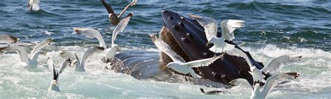 Boat Tours Kennebunkport Maine by Kennebunkport Whale Tours And Fishing Charters