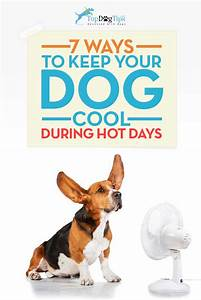 7 Ways to Keep Your Dog Cool in Summer – Top Dog Tips