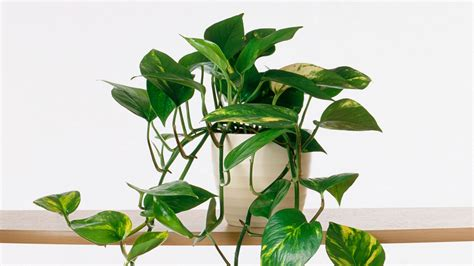 Wohnen Mit Pflanzen by Growing Indoor Plants Southern Living