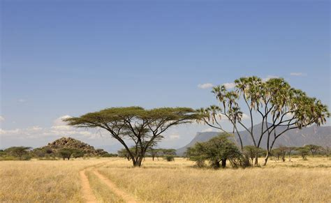 African Safari Landscape Hd Desktop Wallpaper, Instagram